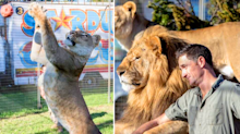 'End of an era': Australia's last lion trainer shrugs off circus controversy