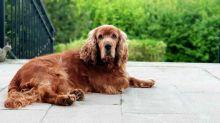 Lascia il cane sulla terrazza. Soccorso dalle forze dell'ordine tra offese e minacce