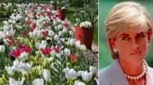 Princess Diana memorial garden burst into spectacular colour display as 12,000 flowers bloom early