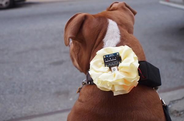 DIY GPS dog collar helps your pup fulfill its mobile computing potential