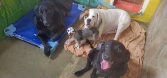 4 Dogs Whose Owners Died of COVIDAre Searching for a New Home 'Together'