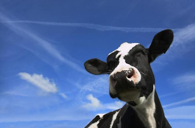 African mobile game rewarded its top players with a real cow