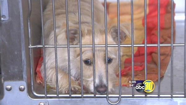 Board balks at putting animal shelter tax to voters