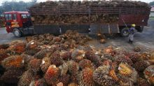 Estate owners demand WHO journal retract article against palm oil or apologise