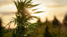 This Marijuana Stock Has Gained 150% Over the Past Month