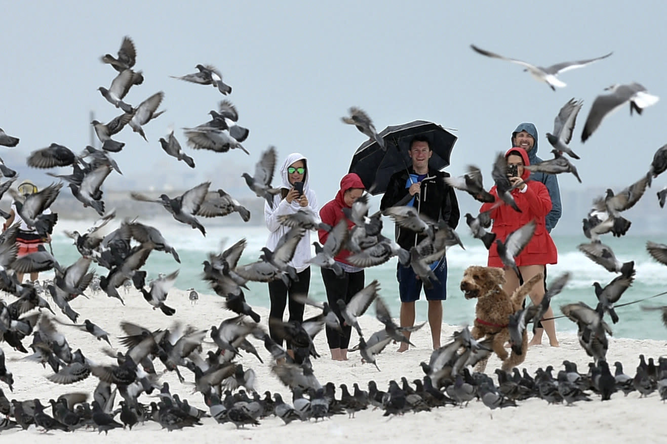 A group of people watch as a pigeons spooked by a dog take flight on the beach at Okaloosa Island near Fort Walton Beach, Fla., on Friday, Oct. 18, 2019. With Tropical Storm Nestor brewing in the Gulf of Mexico, curious onlookers in this Florida panhandle community came out to see the effects of the storm as it approached. (Devon Ravine/Northwest Florida Daily News via AP)