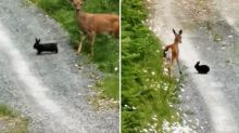 Wild deer and bunny dubbed 'real-life Bambi and Thumper'