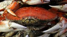 Vancouver Island fisherman convicted in crab poaching case