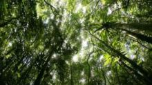 Trees that grow quickly die faster releasing CO2, challenges notion that forests are sinks for carbon emissions
