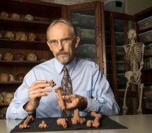 Human ancestor 'Lucy' adept at tree climbing as well as walking