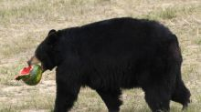 Teen Survives Bear Attack After Waking To Animal 'Crunching' On His Head