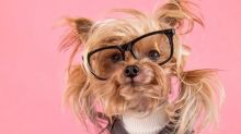 """Cadelinha """"cabeluda"""" faz sucesso com seus looks no Instagram"""