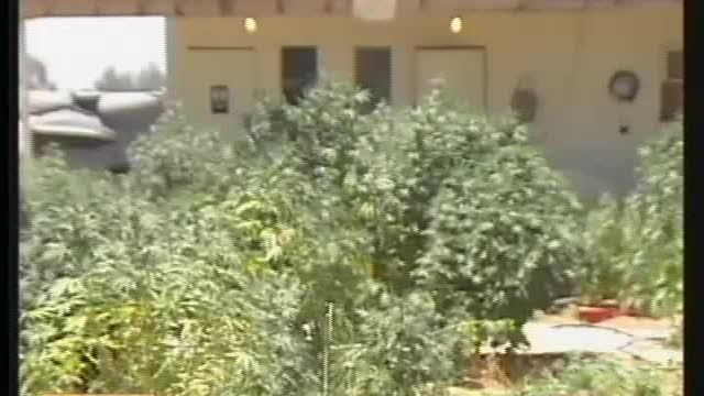 Residents Upset Over Neighboring Marijuana Garden