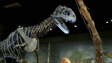 Dinosaurs Invade The Science Museum