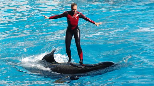 Animal Rights Activists Protest Seaworld