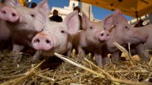 US pork farms ditch a controversial growth drug to snag Chinese markets