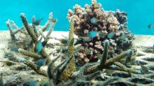 Small window to save reefs, study finds