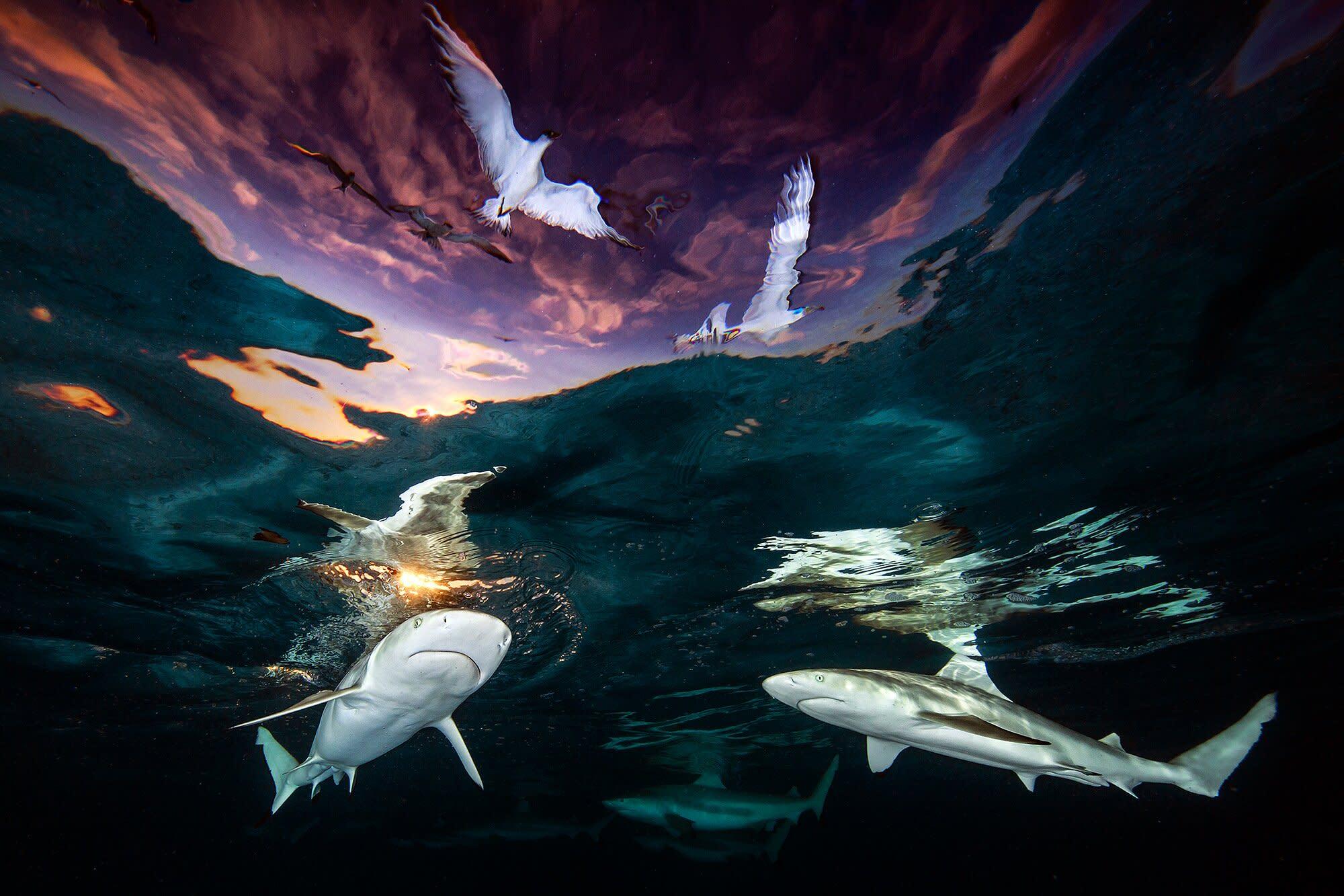 Paws underwater shark attack SweatShirt