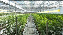 Pot's Premier Property Mogul Keeps Finding More Marijuana Opportunities