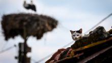 Quieren poner un confinamiento a las mayores máquinas de matar: los gatos domésticos