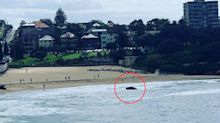 'Huge': Incredible object washes up on Sydney beach after floods