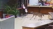 Deer smashes through window of Arkansas courthouse