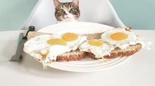 Diez alimentos muy peligrosos para los gatos