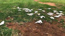 'Cruel and disgusting': Disturbing act behind photo of dead birds