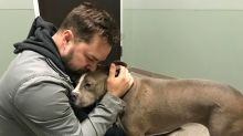 Veteran reunited with missing dog in Christmas miracle: 'I am overwhelmed with gratitude'