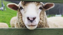 PETA asks the village of Wool to change its name