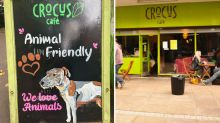 Vegan cafe targeted in series of offensive attacks