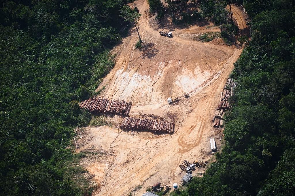 Logging at the Amazon and other rainforests represents 21.3 percent of the total risk to plant species, according to a study by Britain's Royal Botanic Gardens (AFP Photo/Raphael Alves)