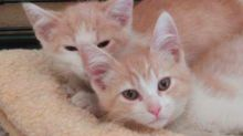 Couple who met on Tinder find out their cats are twin brothers