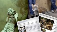 Shocking ads selling white lion and tiger cubs to Aussies appear on Facebook