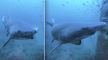 WATCH: Scuba diver exploring shipwreck startled by stealthy shark