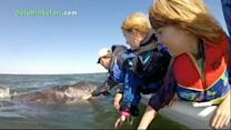 Whale Watchers Pet Grey Whale