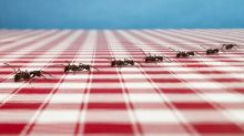 Got ants? Here's how to get rid of them, according to an entomologist