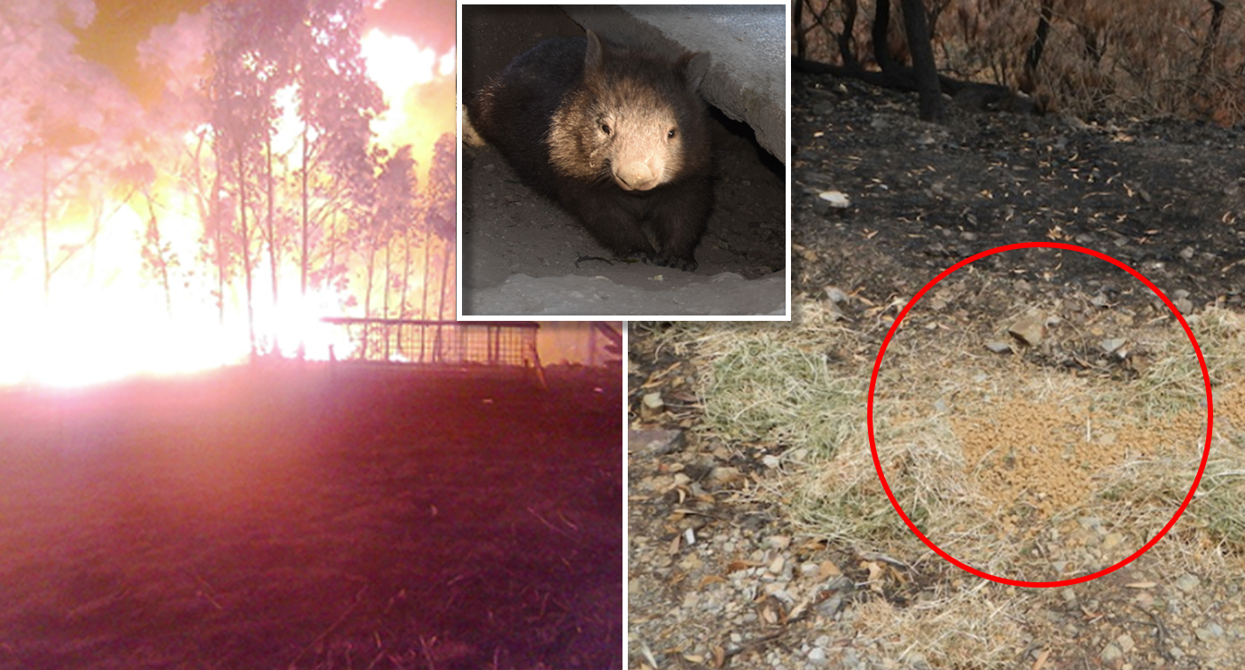 'I beg you': Kind act for stricken animals backfires with tragic consequences