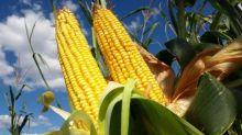 Ricerca Ue, colture pi produttive con l'aiuto della genomica