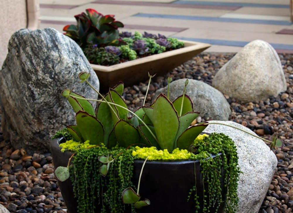 "Goodbye Grass: 7 Inspiring Ideas for a ""No Mow"" Backyard on No Mow Backyard Ideas id=62825"
