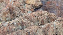 ¿Puedes ver el leopardo escondido en la foto? El difícil desafío que enloquece a las redes