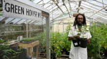 Los inversores financieros se fijan en el cannabis