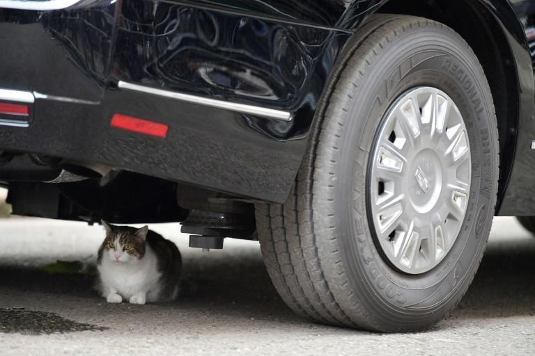 Larry the Downing Street cat sits behind a Goodyear tire underneath The Beast, the armoured Cadillac of US President Donald Trump, in Downing Street in London on June 4, 2019