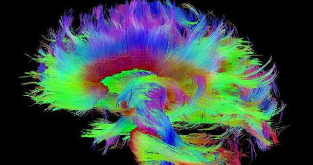 Scientists think this is where your consciousness lives