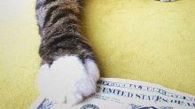 Este gato tiene más dinero que tu, ¡la gente se lo regala!