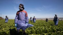 Every Single Worker Has Covid at One U.S. Farm on Eve of Harvest