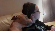Após ser adotado, pit bull mostra gratidão e não para de abraçar a nova dona