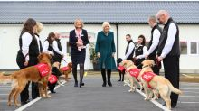 Camilla, Duchess of Cornwall, Meets Dogs Trained to Detect Disease