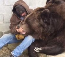 What Does A Sick Bear Really Need? How About A Big Ole Bear Hug