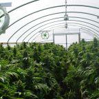 Better Marijuana Stock: Aphria vs. Aurora Cannabis